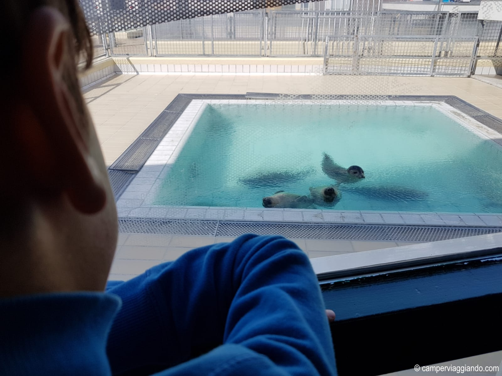 Pieterburen piscina con le foche